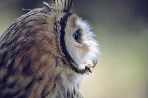 Vision&Values_Owl